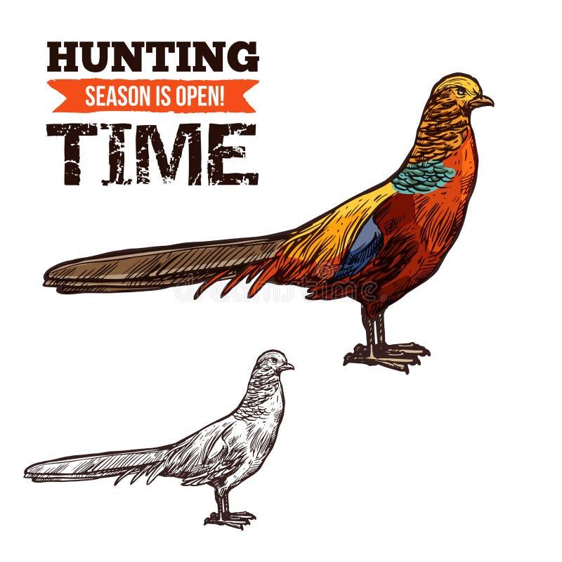 Pássaro selvagem do faisão, esboço do vetor ilustração royalty free
