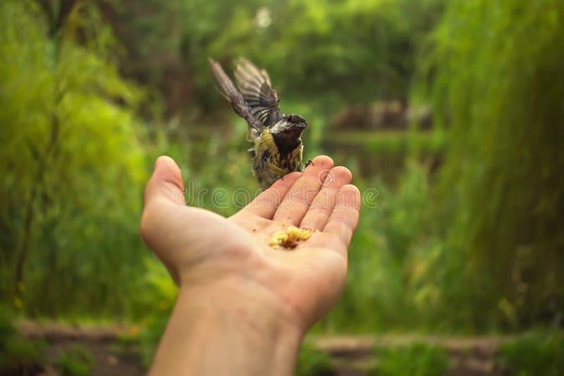 Pássaro selvagem na palma de um verão borrado do fundo fotos de stock