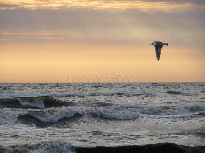 Pássaro sobre o mar fotos de stock royalty free