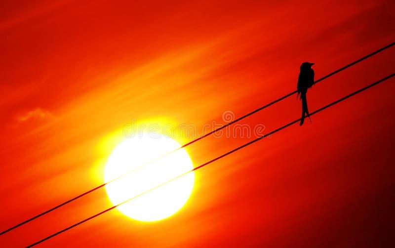 Pássaro solitário imagens de stock