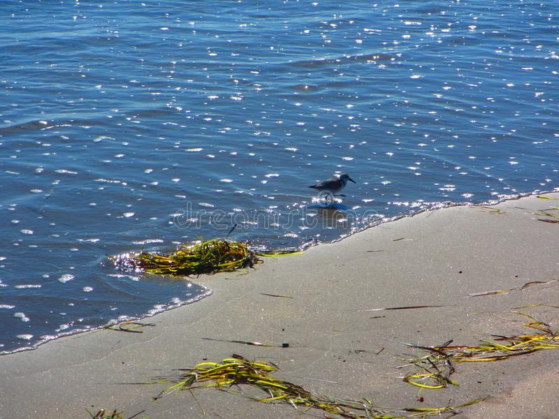Pássaro solitário na borda do ` s da água imagem de stock