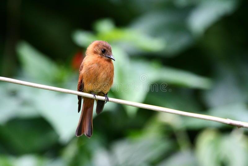 Pássaro tropical fotos de stock