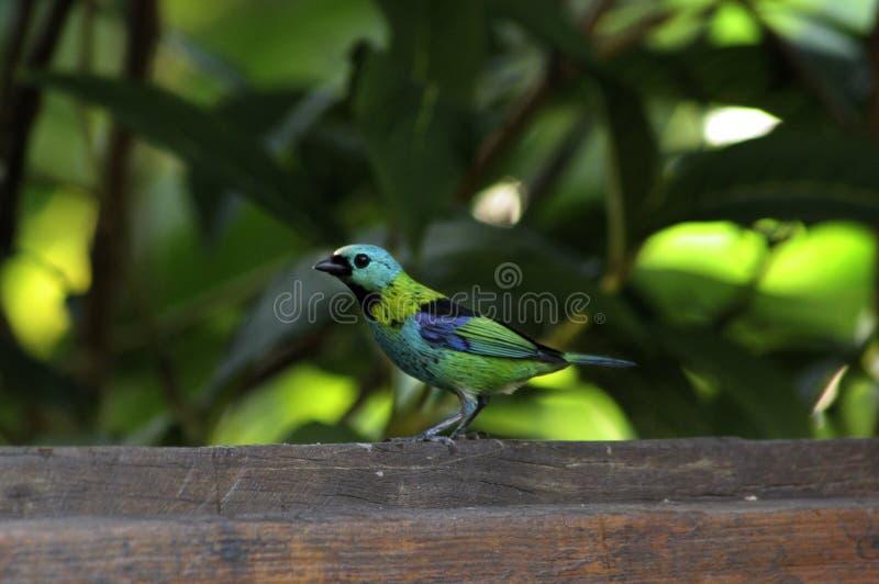 Pássaro tropical fotografia de stock royalty free