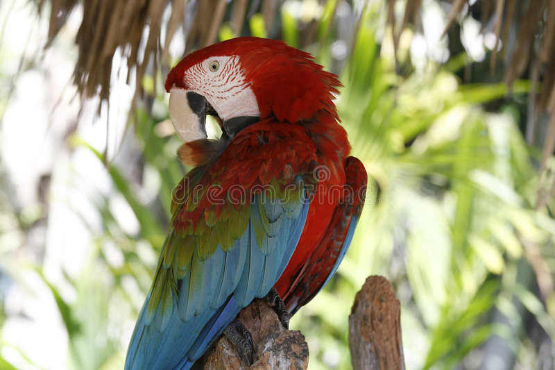 Pássaro tropical bonito imagem de stock royalty free