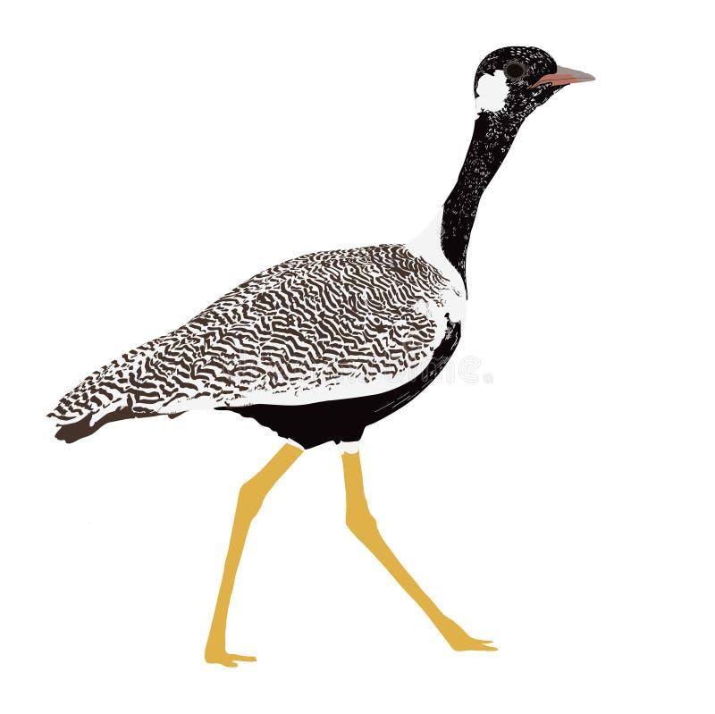 Pássaro unido dobro do courser ilustração royalty free