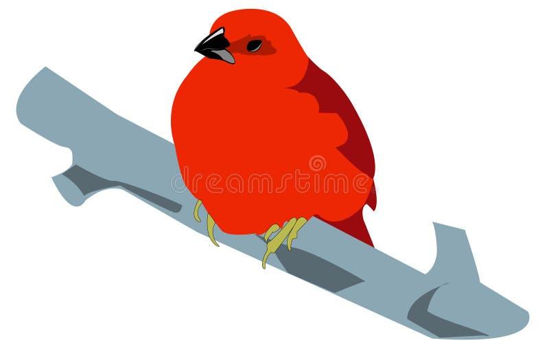 Pássaro vermelho ilustração do vetor