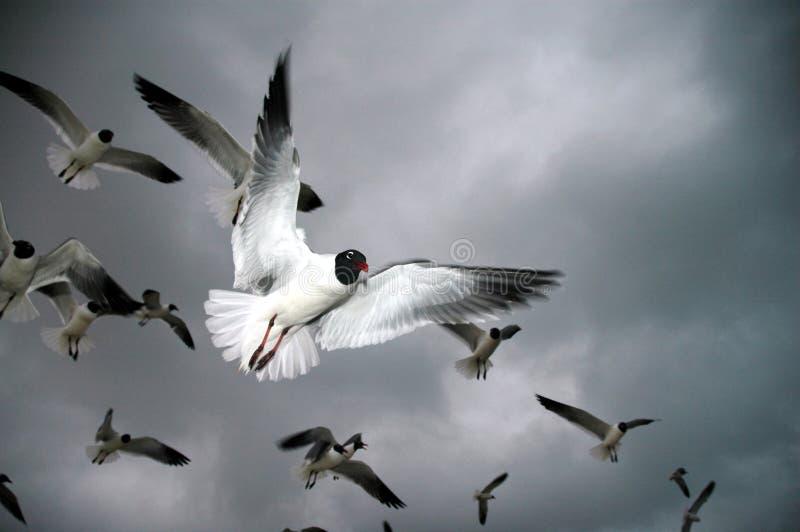 Download Pássaros foto de stock. Imagem de oceano, pássaros, filmes - 10058196