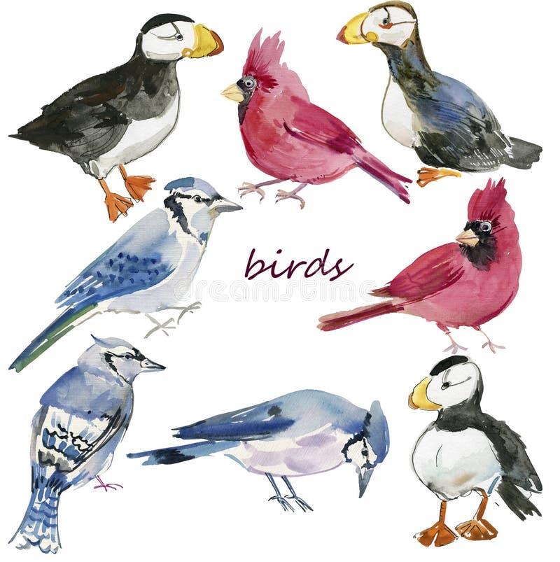 Pássaros ajustados watercolor Ilustração pintado à mão isolada no fundo branco ilustração stock