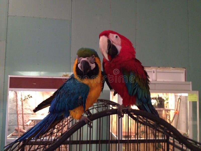 Pássaros bonitos imagem de stock