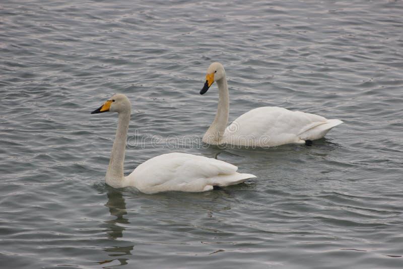 Pássaros bonitos na mola adiantada na praia imagens de stock royalty free