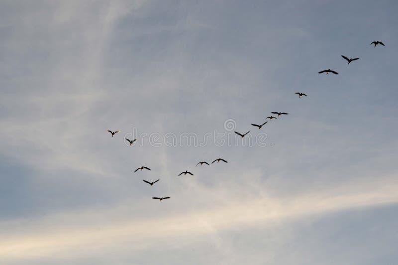 Pássaros chaves no céu imagens de stock