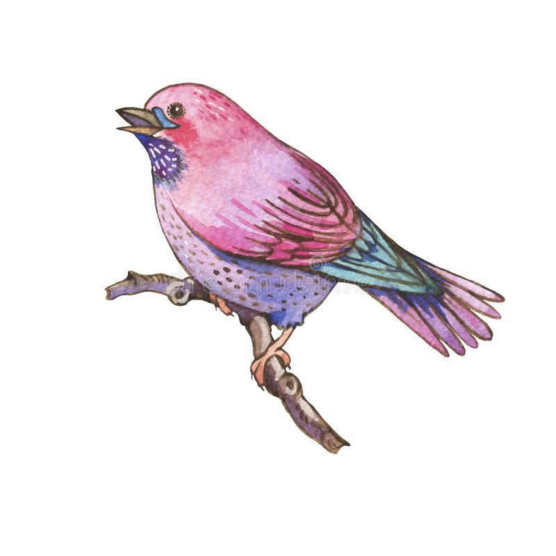 Pássaros coloridos das aquarelas isolados no fundo branco ilustração royalty free