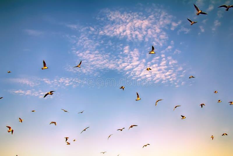 pássaros crescentes ao apreciar nuvens de altocumulus impressionantes imagem de stock royalty free