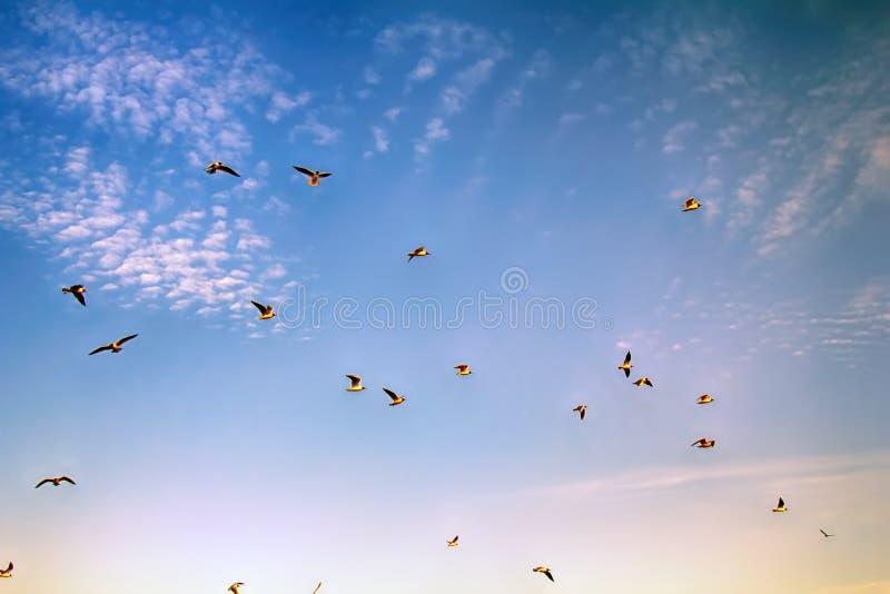 pássaros crescentes ao apreciar nuvens de altocumulus impressionantes fotos de stock