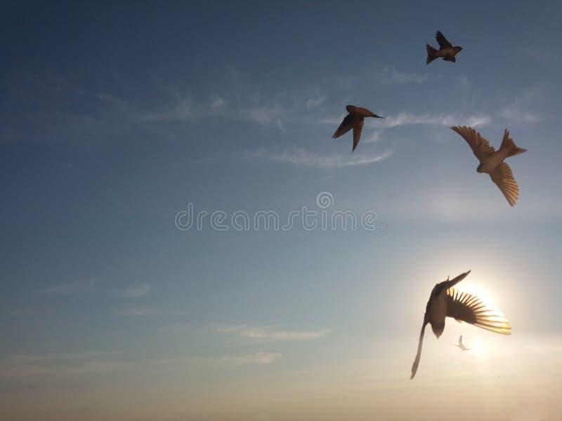 Pássaros da andorinha que voam no céu imagem de stock