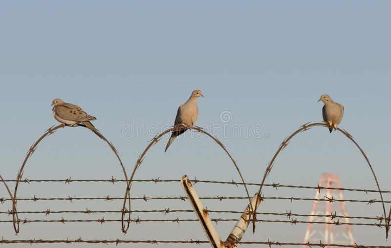 Pássaros da cadeia foto de stock