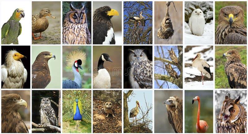 Pássaros da colagem imagem de stock