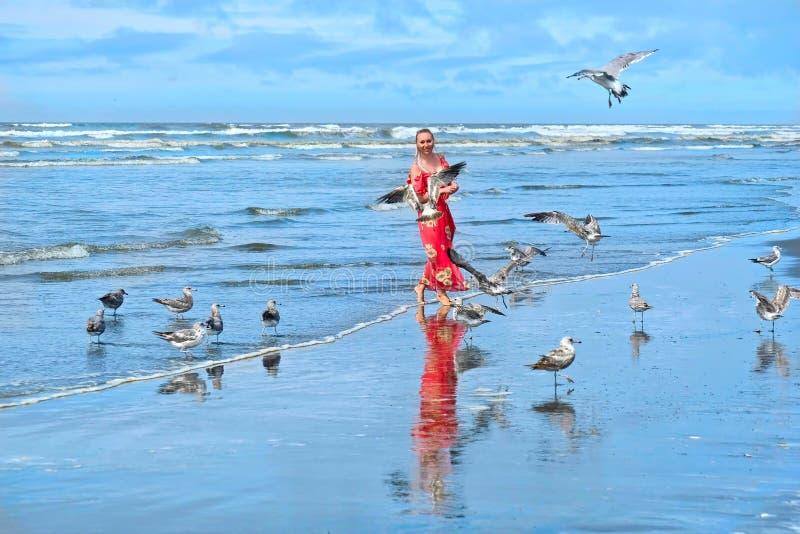 Pássaros da mulher e das gaivotas na praia pelo mar foto de stock