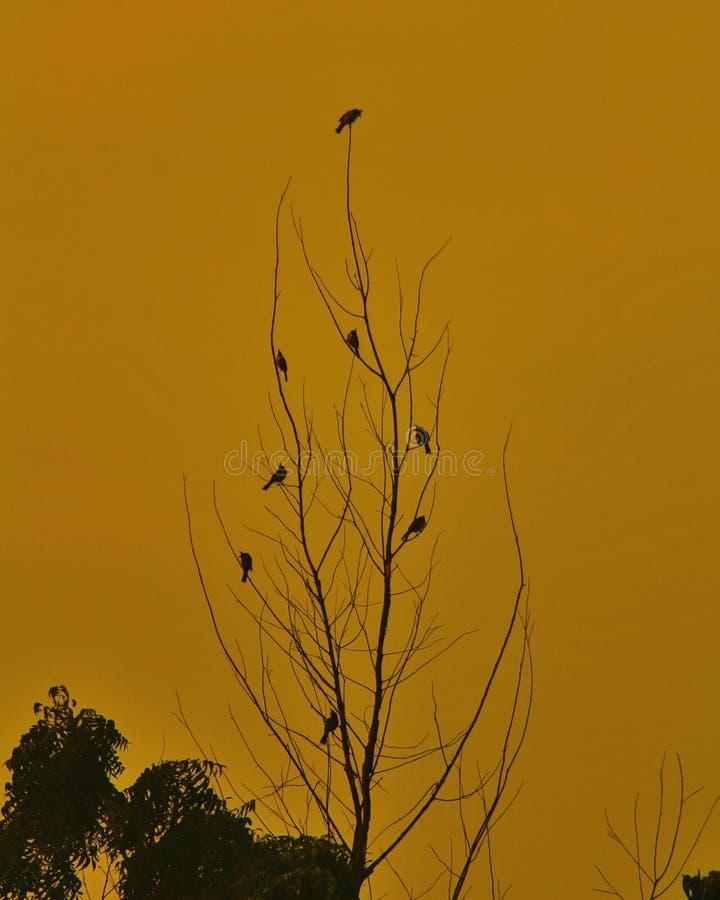 Pássaros da noite imagem de stock