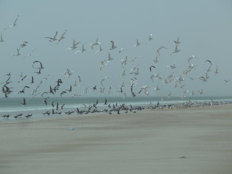 Pássaros da praia fotos de stock