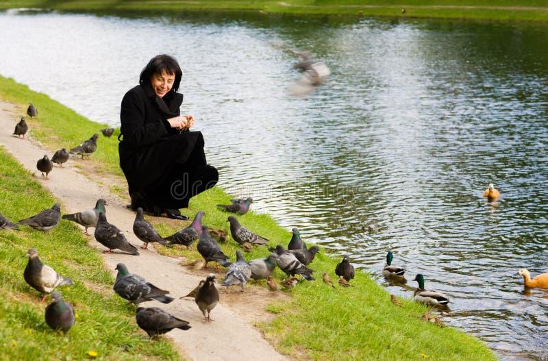 Pássaros de alimentação fotografia de stock royalty free