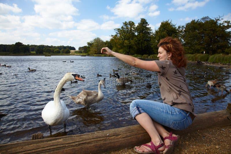 Pássaros de alimentação da menina em um lago imagem de stock royalty free