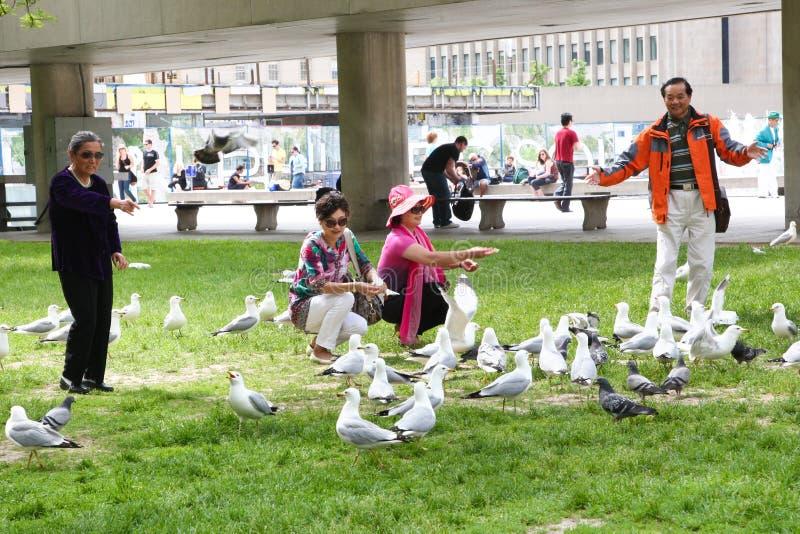 Pássaros de alimentação dos povos no parque imagens de stock royalty free