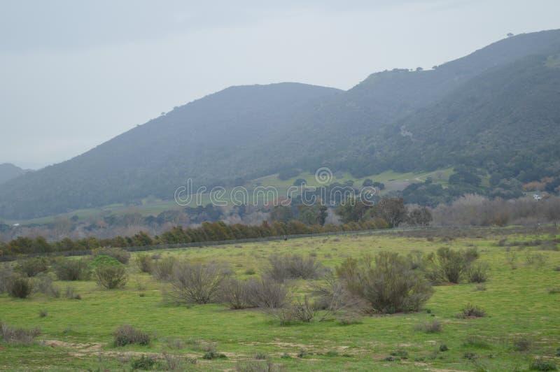 Pássaros de Califórnia foto de stock royalty free