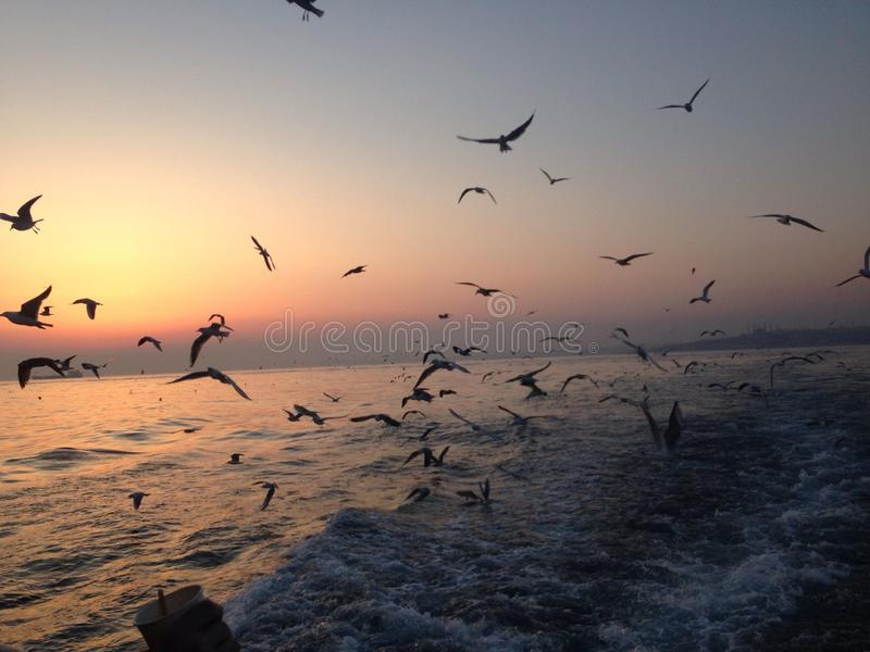Pássaros de dança no mar foto de stock