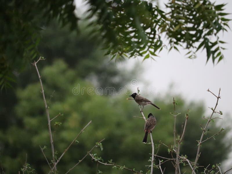 Pássaros de fotos bonitas de india dos pássaros fotografia de stock royalty free