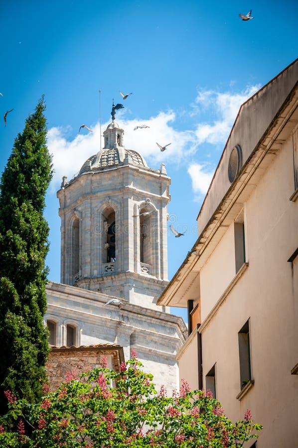 Pássaros de Girona para fora para um voo do dia foto de stock royalty free