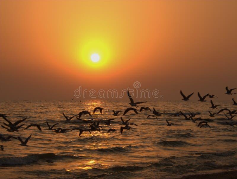 Pássaros de mar do vôo no por do sol