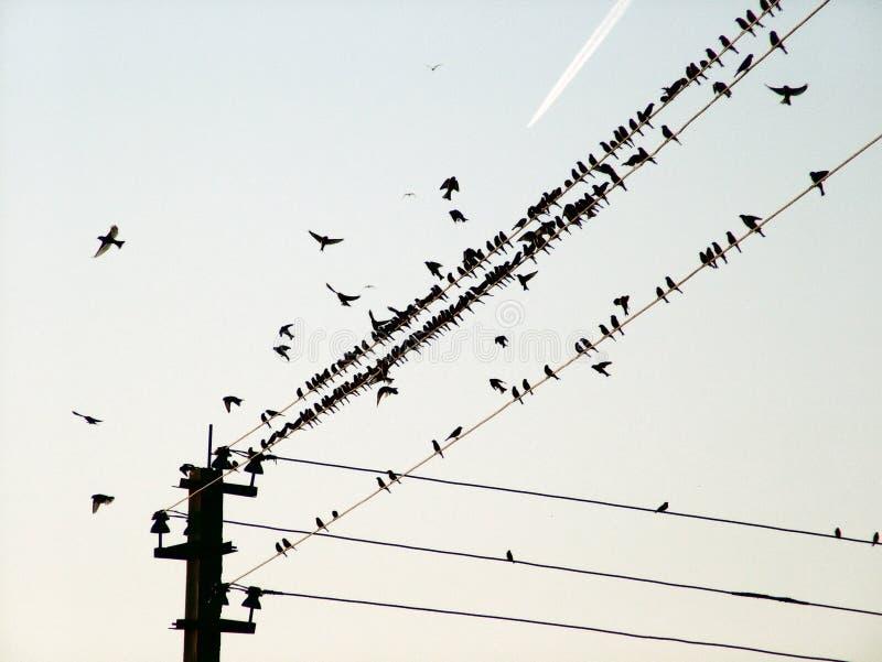 Pássaros de um fio e do plano do vôo imagem de stock royalty free