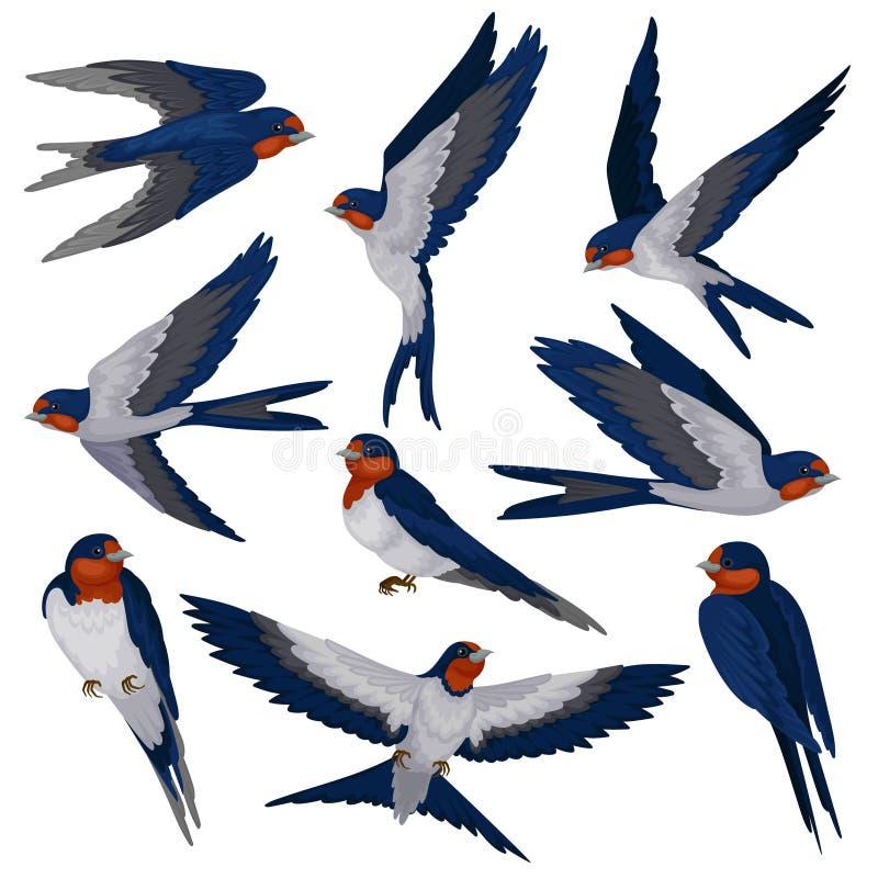 Pássaros de voo da andorinha em várias vistas grupo, rebanho da ilustração do vetor dos pássaros em um fundo branco ilustração do vetor