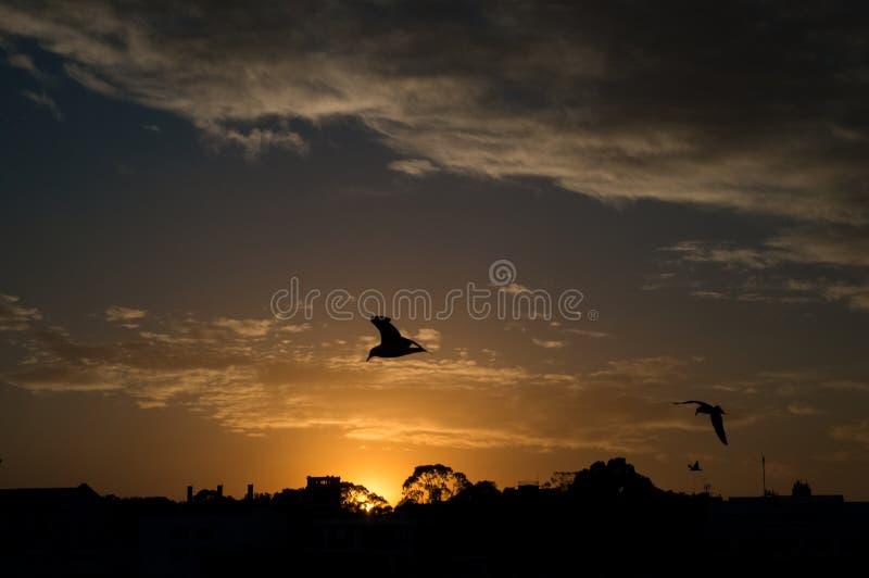 Pássaros de voo durante o por do sol imagens de stock