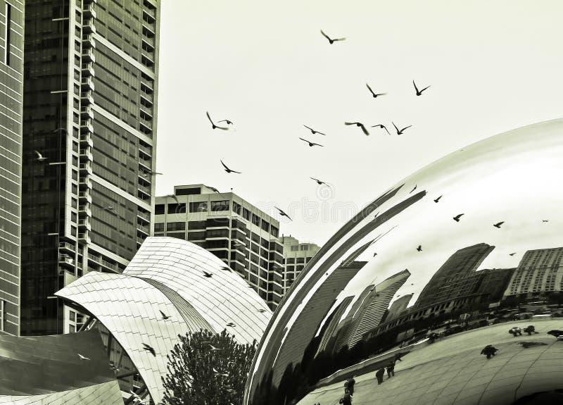 Pássaros de voo em Chicago (preto e branco) imagem de stock