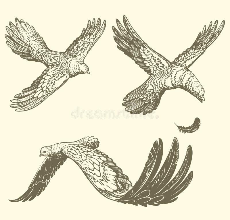 pássaros de voo, similares às letras Face das mulheres Hand-drawn de illustration Gravura retro do vintage fotografia de stock