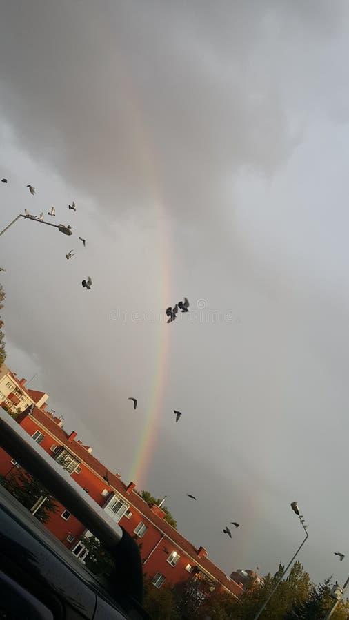 Pássaros do arco-íris imagem de stock royalty free