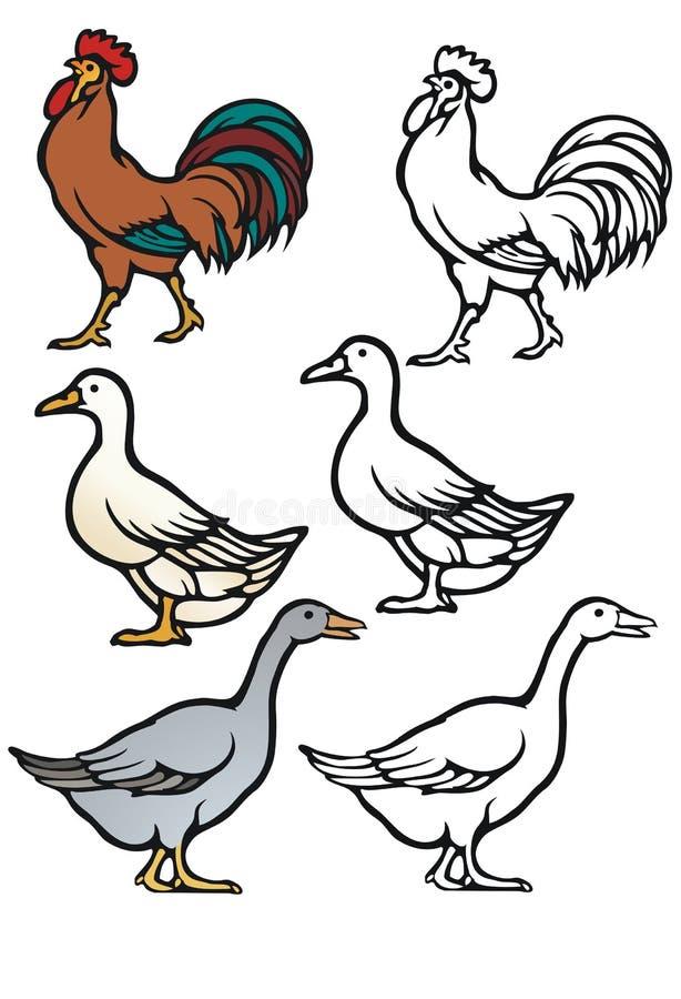 Pássaros do Barnyard ilustração do vetor