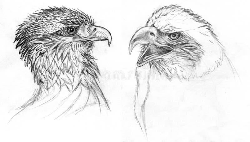 Pássaros do desenho da rapina ilustração royalty free