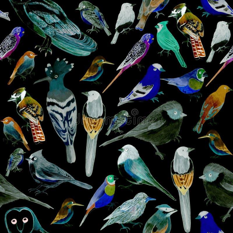 Pássaros do fundo sem emenda da aquarela dos animais de estimação de América e dos pássaros selvagens ilustração do vetor