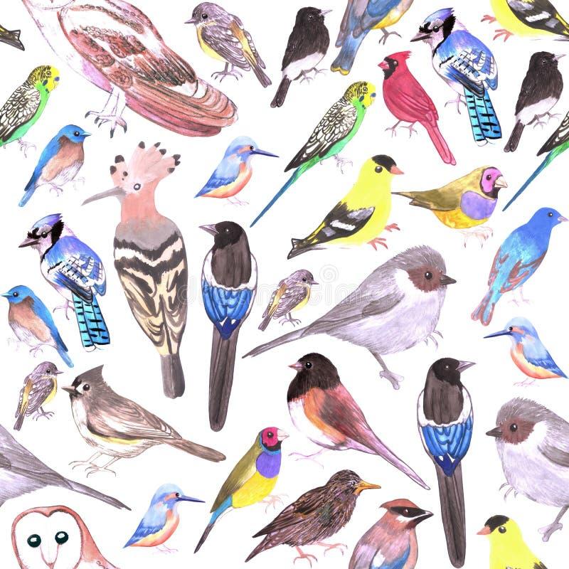 Pássaros do fundo sem emenda dos animais de estimação de América e dos pássaros selvagens ilustração stock