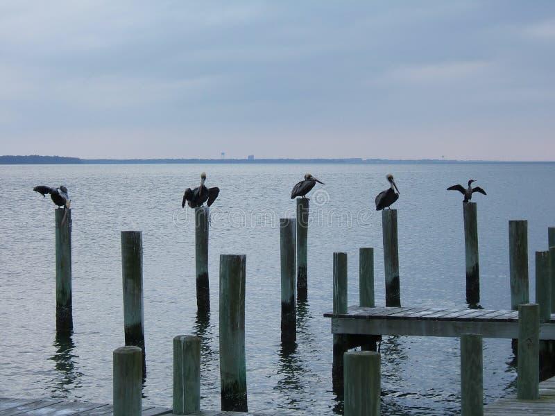 Pássaros do oceano imagens de stock