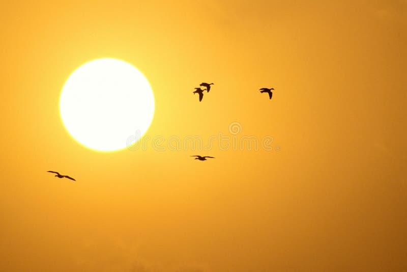 Pássaros do por do sol fotos de stock