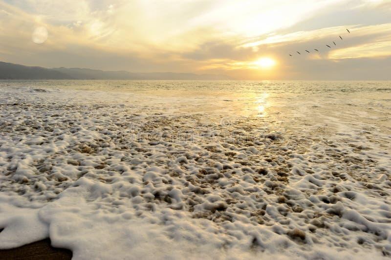 Pássaros do por do sol do oceano fotografia de stock