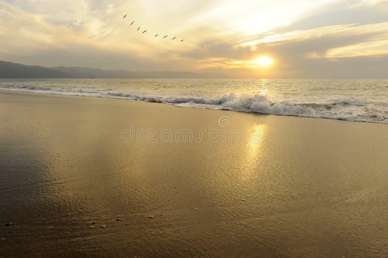 Pássaros do por do sol do oceano imagem de stock