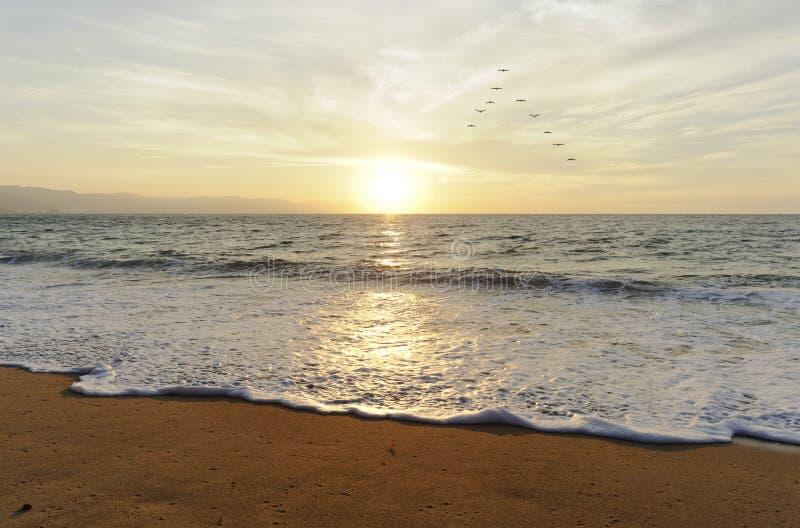 Pássaros do por do sol do oceano fotografia de stock royalty free