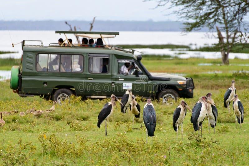 Pássaros do relógio no safari imagens de stock