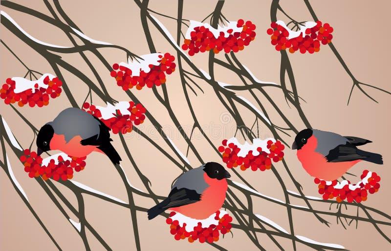 Pássaros do vermelho do inverno ilustração stock