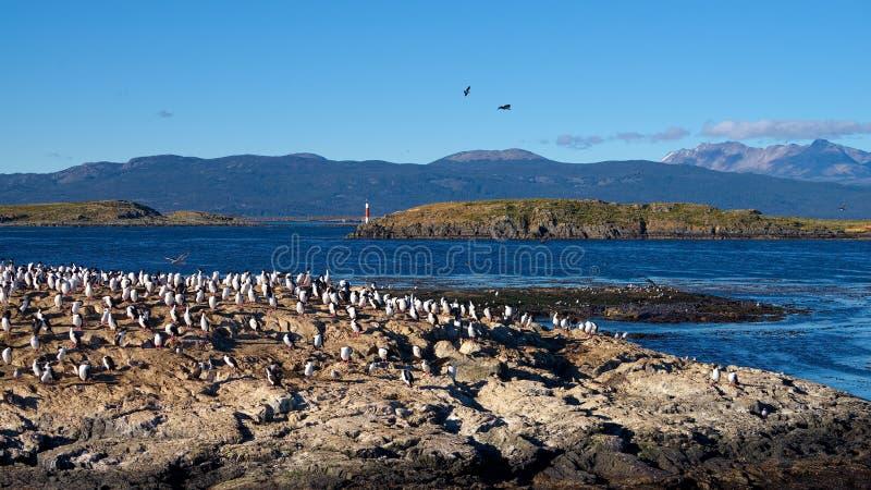 Pássaros e farol no canal do lebreiro, Tierra del Fuego foto de stock